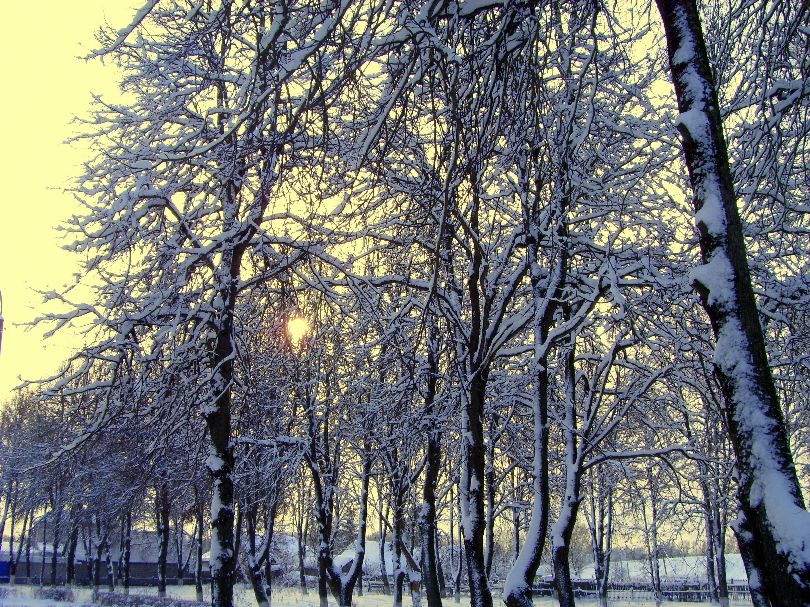 Под морозным солнцем