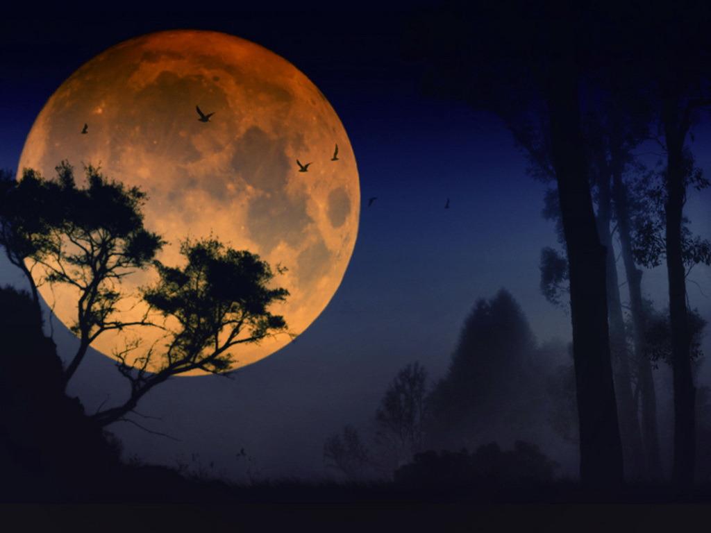 Волшебная Луна над волшебным лесом