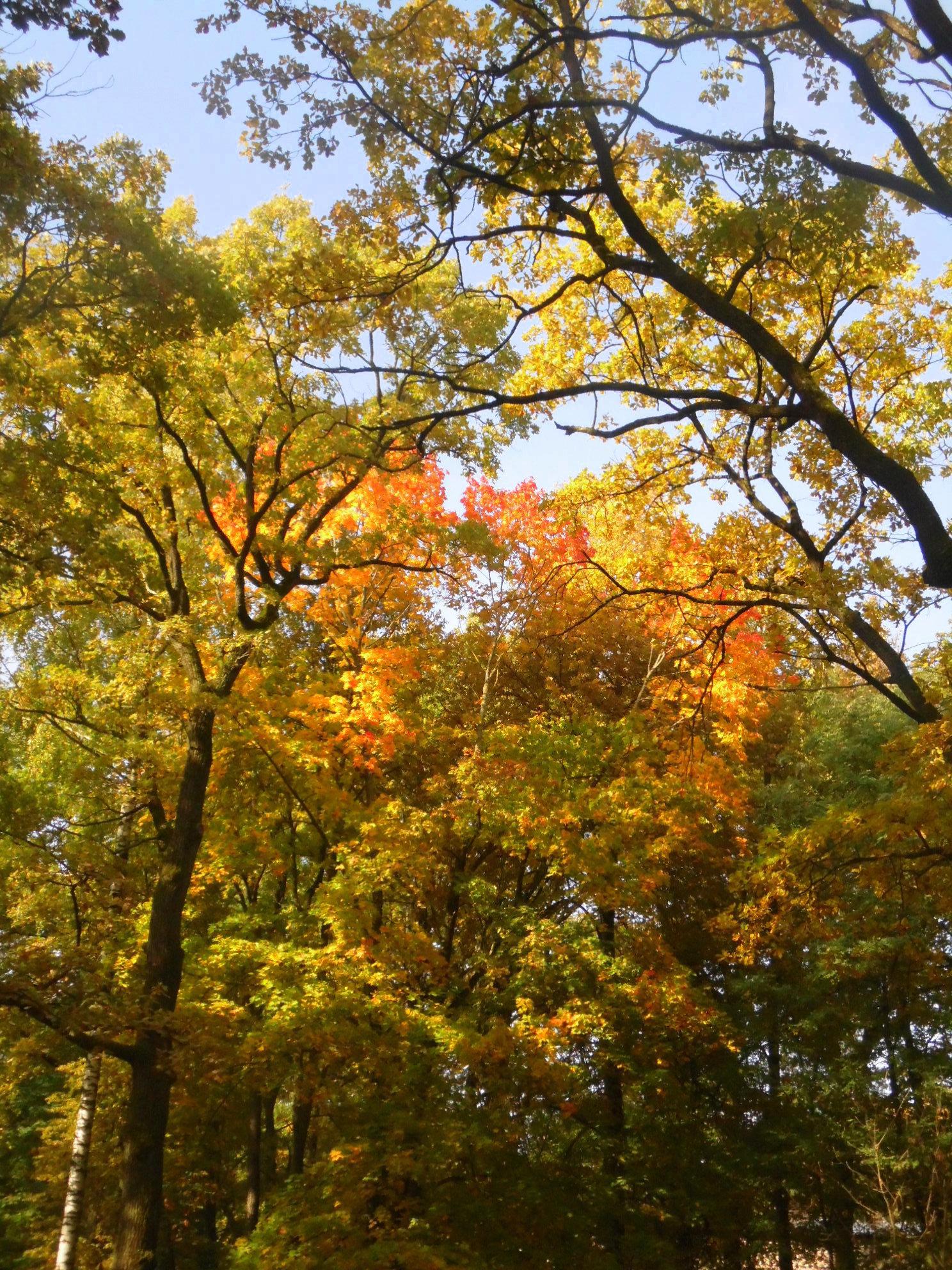 Грядущая осень