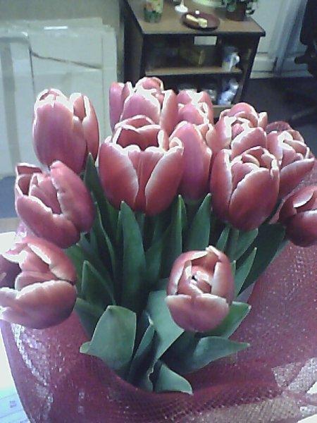 розовые тюльпанчики...