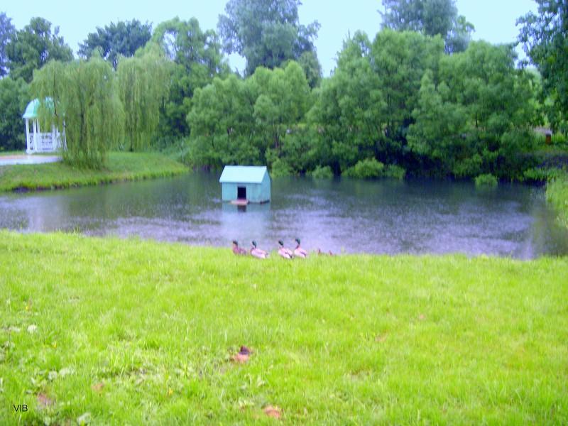 Приусадебный пруд