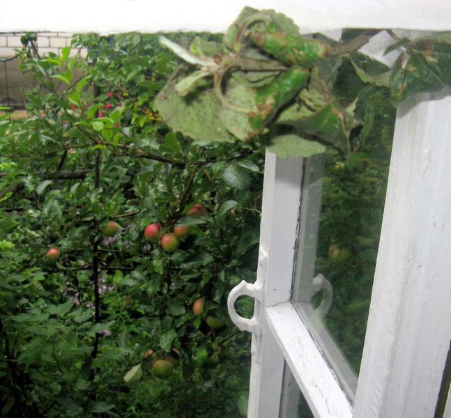 Ветки просятся в окно: сорви меня...