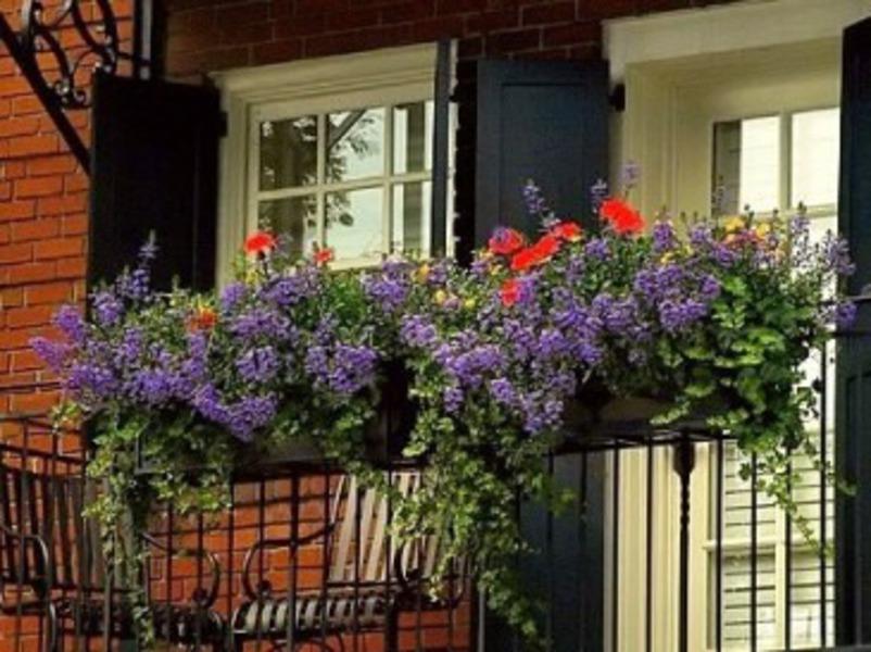 Июль для комнатных и балконных цветов любимые цветы.