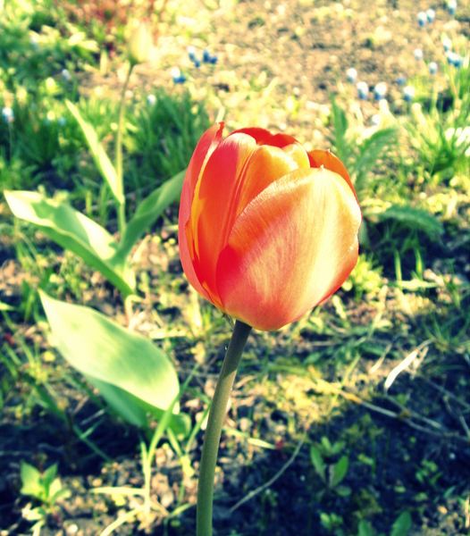 Солнечной весны маленький привет