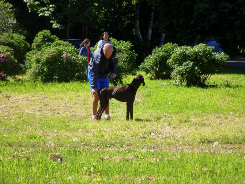 Ухаживания за собакой