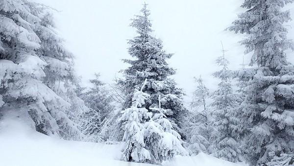 где то в лесу зимой