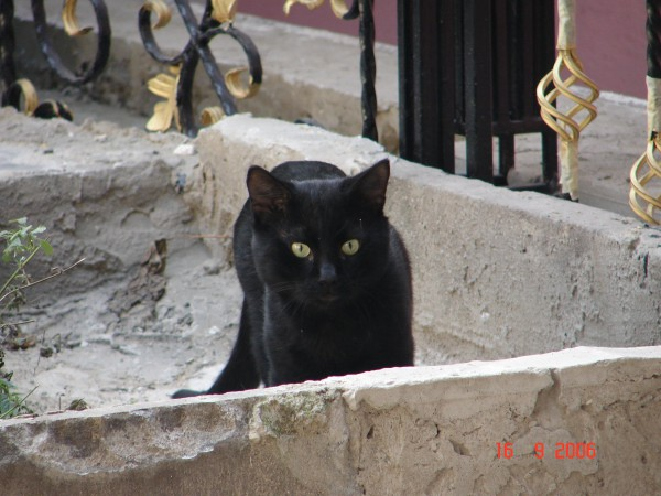 Одесский кот