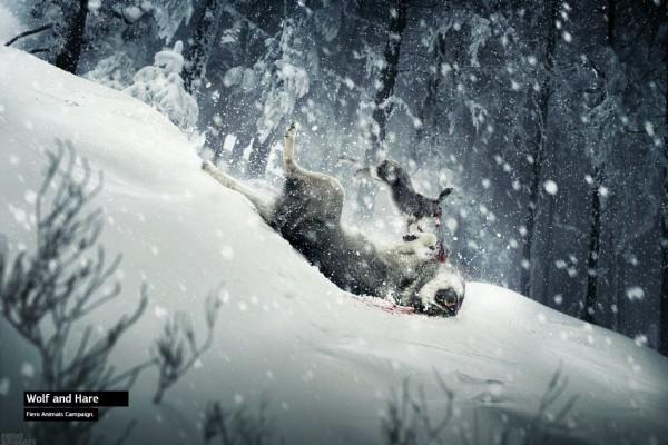 Fiero Animals Campaign (Wolf)