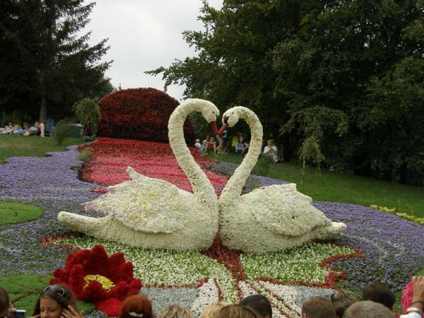 Выставка цветов. Киев-2008г.