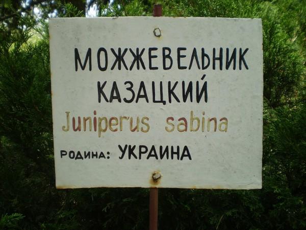 Среднестатистический украинский кустарник