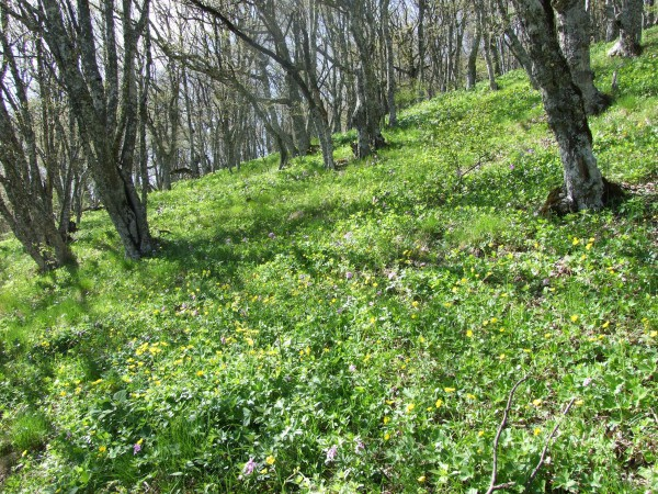 Эльфийская поляна