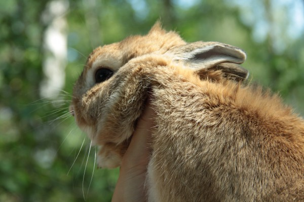 Вредный кроль!
