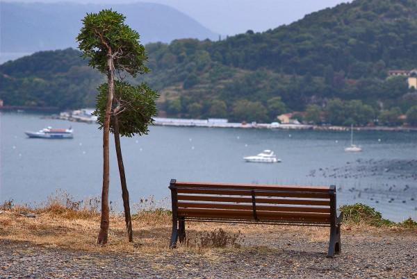 Италия. Влюбленные деревья