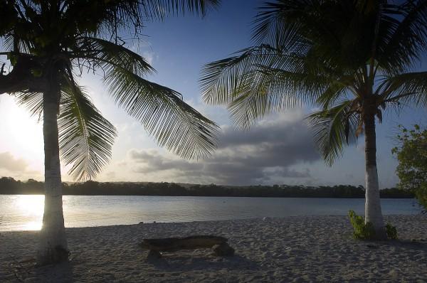 Путешествие к морю. Пальма, море и песок