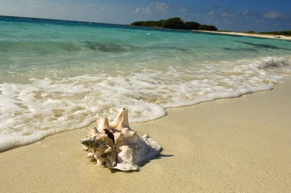 Путешествие к морю. Ракушка на берегу