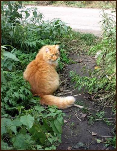 Мой котик, любит гулять на природе