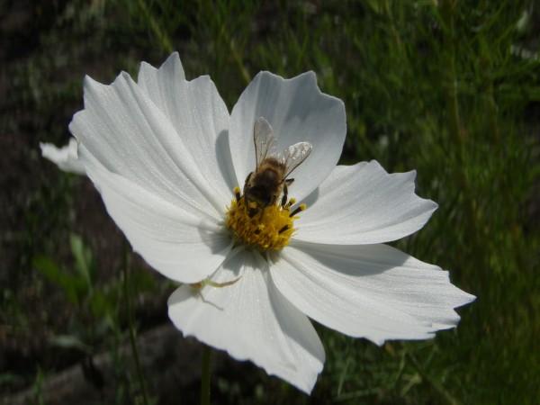 Пчела и паук
