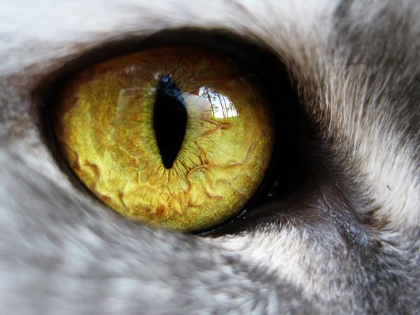 Глаз моей кошки :)