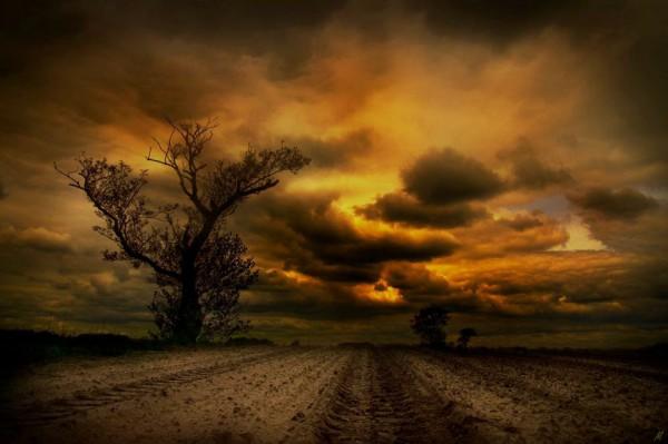 «Разволновавшееся небо» (из серии «Осень - рыжая подружка»)