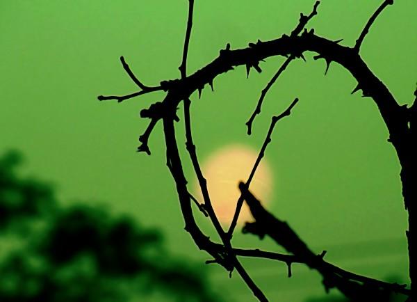Раннее утро, луна заходит