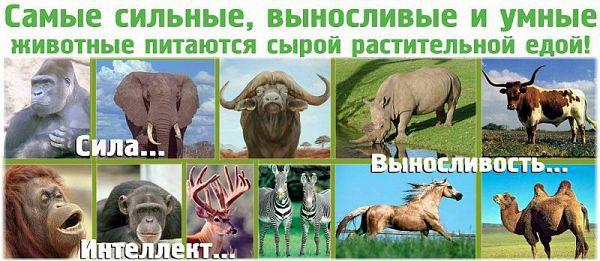 Самые сильные и выносливые животные