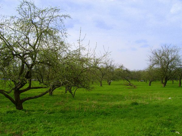 Монастырский яблоневый сад