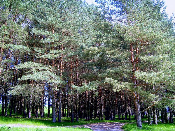 Дарковичский лес