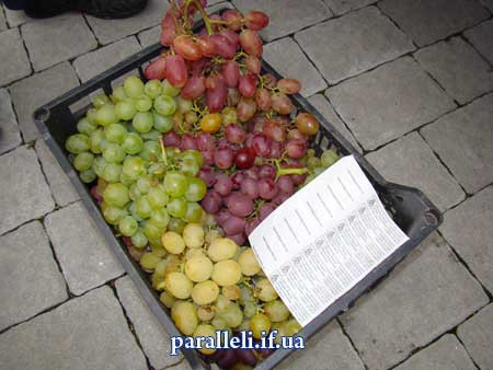 В Ивано-Франковске прошел Праздник винограда - http://paralleli.if.ua/news/35227.html