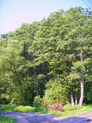 Лес в центре дачного посёлка