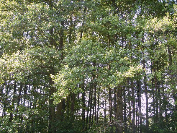 Летний дачный лес