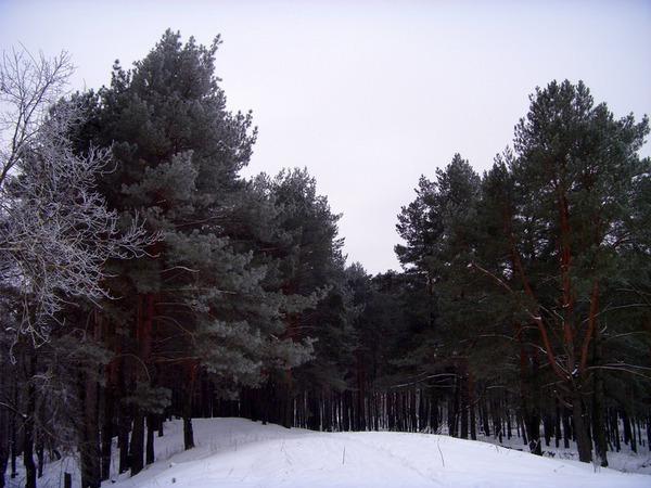 Зимняя опушка