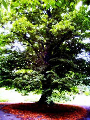 Встало дерево на пути