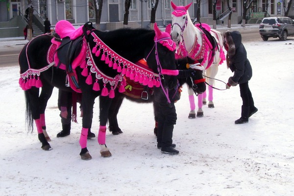 Зимние пони