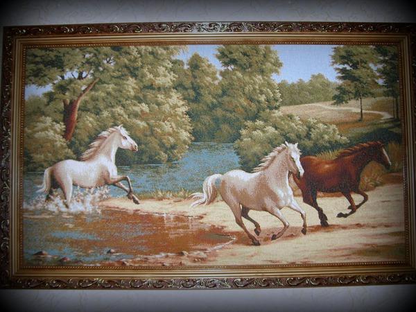 Кони,мои кони