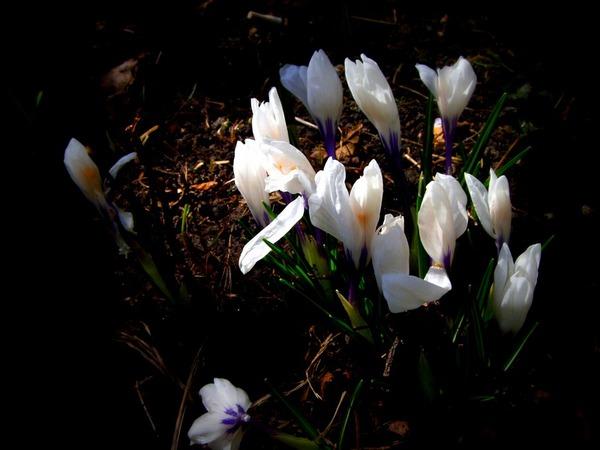 Первые всходы весны