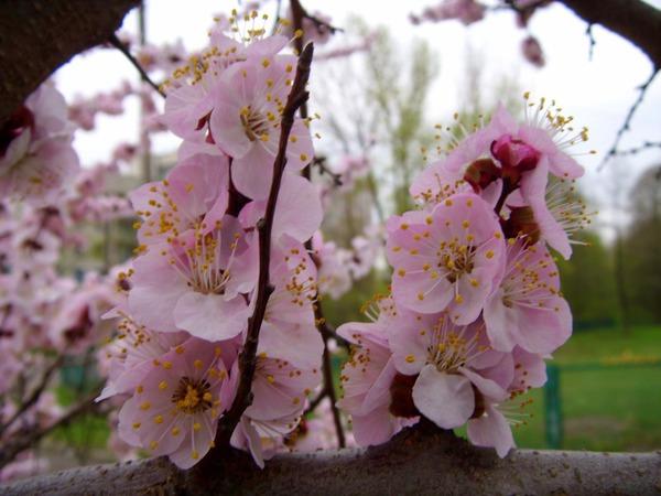 День цветочного сурка
