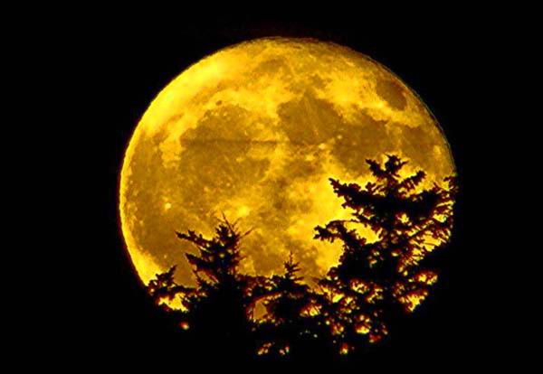 Луна над сосной