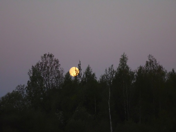 Лунный майский вечер
