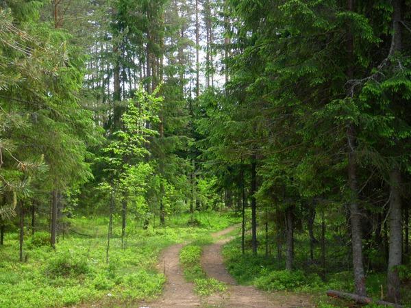 Дорога ведущая в лес