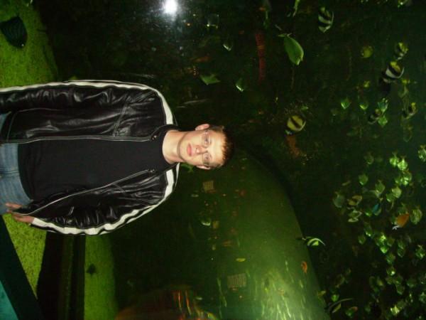 kazino vozle akvariyma