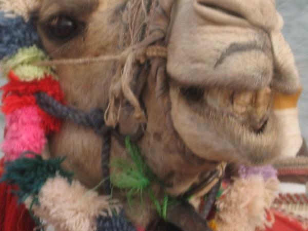 Голливудская  улыбочка, или  не  чистите  зубы  египетской  пастой =)))