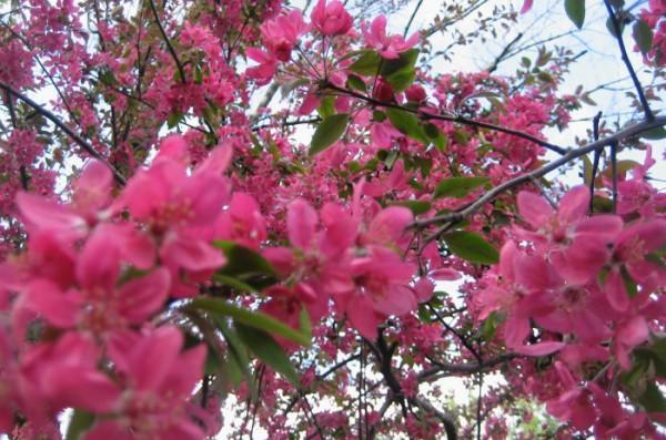 еще раз розовая весна