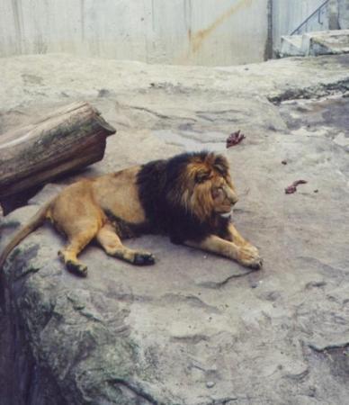 Большая КОШКА!!! (Московский зоопарк)