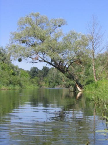 любимая речка...