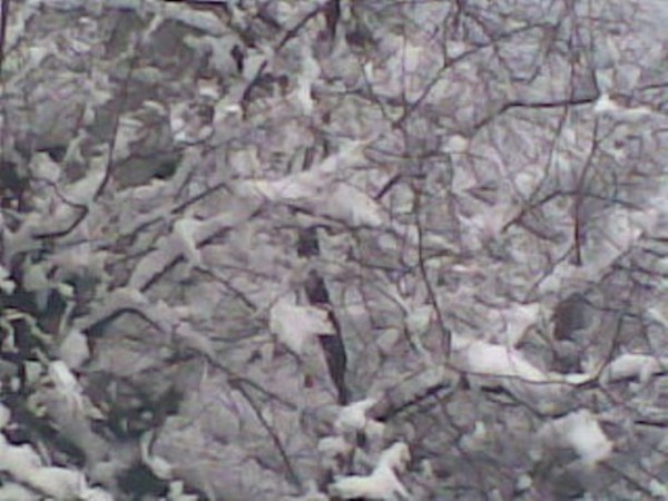 Вот она какая зима осенью.............