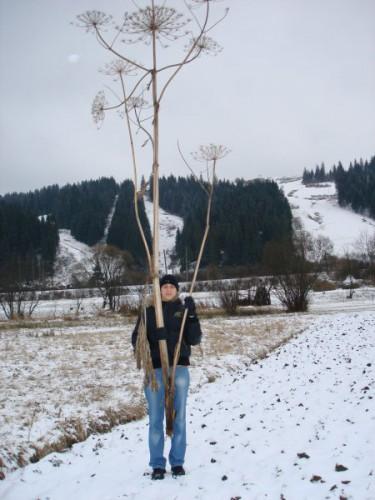 Новый год 2006/07, карпаты, поход за елкой)