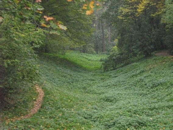 почти эльфийский лес