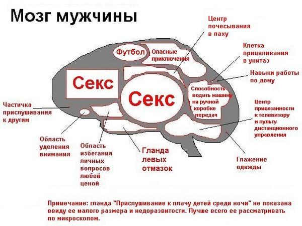 мужской мозг=)))))