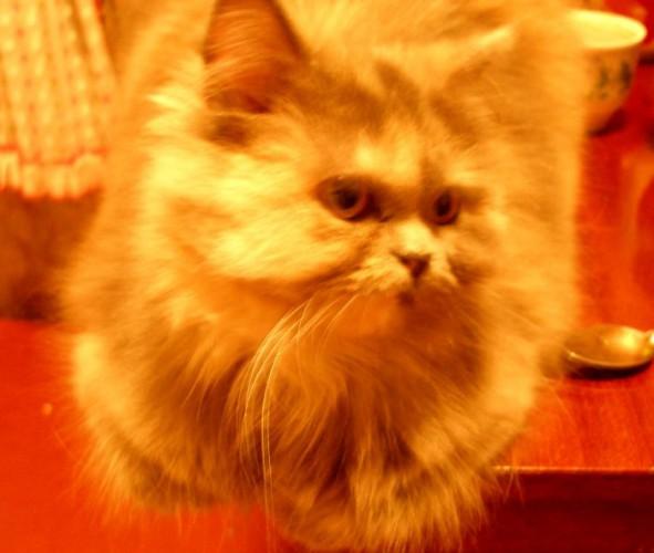 моя котенька....игривая)))умудрилась настоле спать)))
