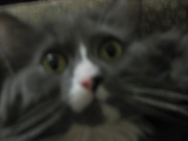 Я сказал БУУУ! Хватит на меня смотреть!
